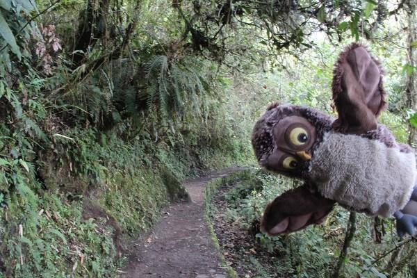 Совушка в джунглях