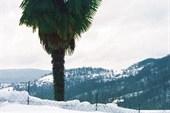 Пальма + снег