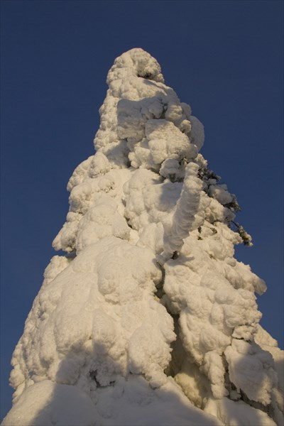 Вот это я понимаю, зимняя елка! ))