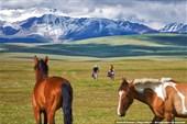 Лошади и кони педальные