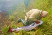 Уловили в среднем течении реки Уян.