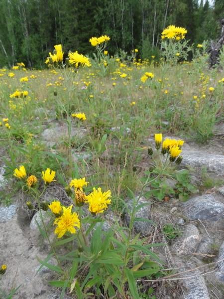 Цветы по берегу.