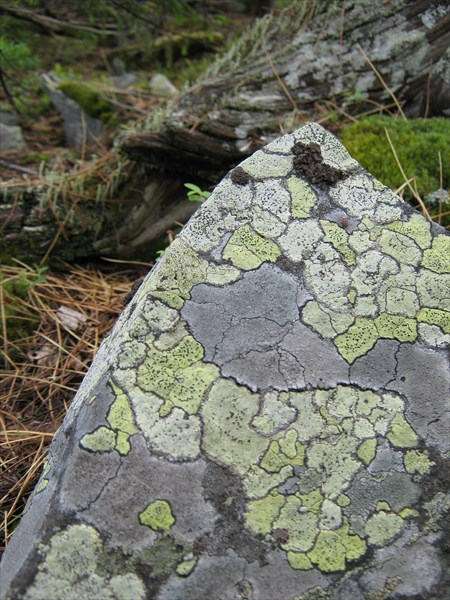 Мозаика на камне.