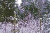 Снегопад превратил всё в сказку