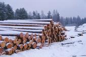 Видимо вырубка леса всё ещё идет