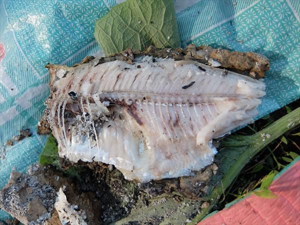 Это не отпечаток аммонита, а рыба в глине!
