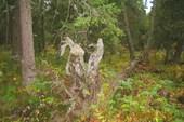 `Деревянный заяц`