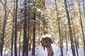 Небезызвестное деревце