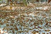 Снег под листопадом