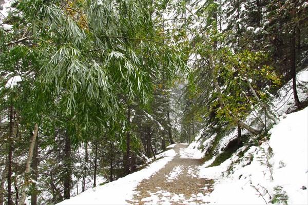 Эти деревья тоже явно не ожидали такого раннего снега