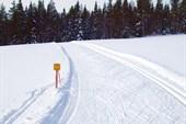 Типичный вид лыжни