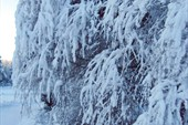 снежная зима Финляндии