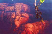 Пресное озеро на о. Черемшиха