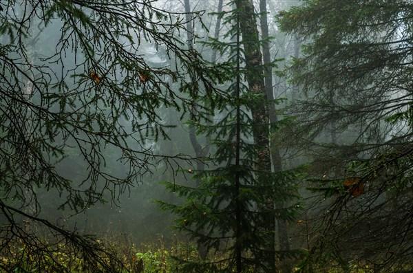 В тёмном лесу 3