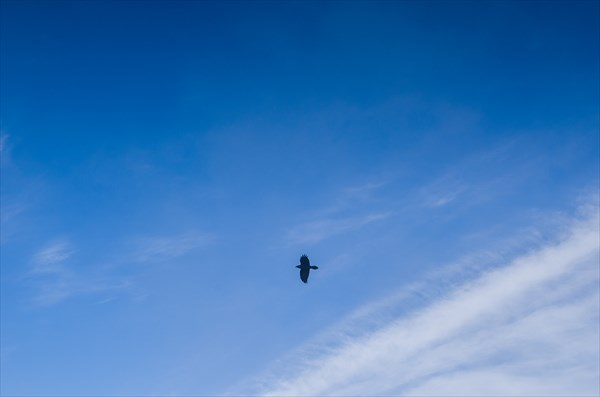 Птичка в небе