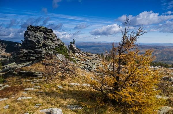 Пейзаж с лиственницей