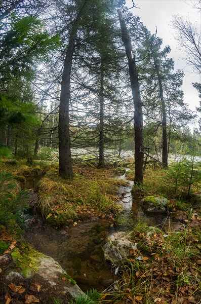 Лесной ручей