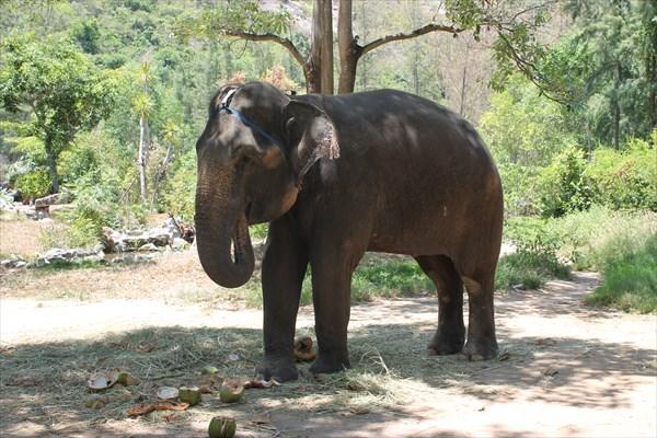 Катание на слоне