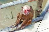 вот именно так выглядит `старая облезлая обезьяна`