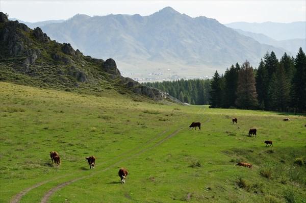 Вид на Онгудай
