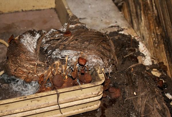 На заброшенном льне выросли грибы...