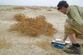 Андрей собирает гербарий