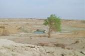 Одинокий тополь на берегу солёной лужи
