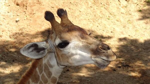 Жирафеныш