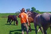 Участник 49 убеждает коней, что жевать туристов вредно