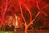 преобразившееся дерево
