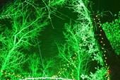 зеленая зима