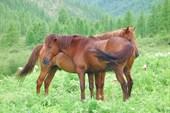 Лошадки.