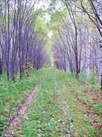 """Экстрим поход """"Осенний марафон 2008"""""""