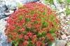 Цветы Абаза