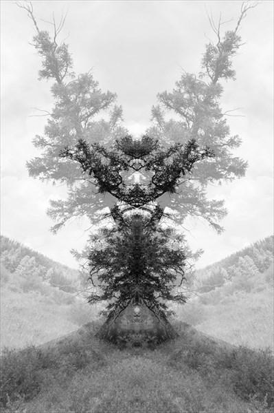 Энты (Пастырь Дерев)