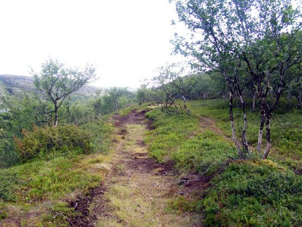 Дорога в лагерь