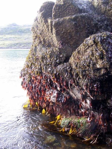 Камни в водорослях