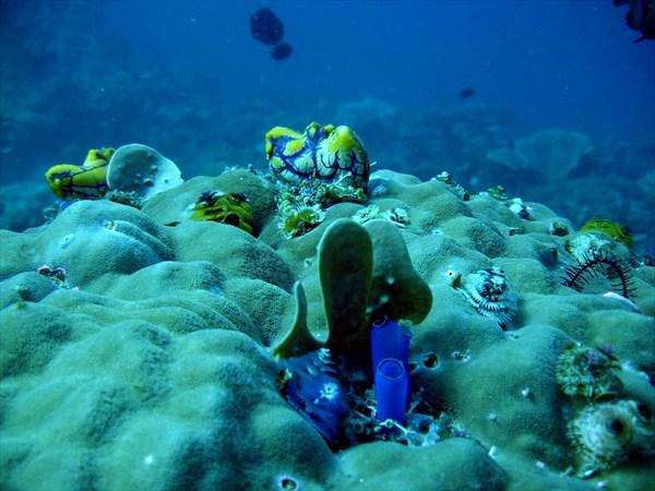 Подводный мир Филиппин
