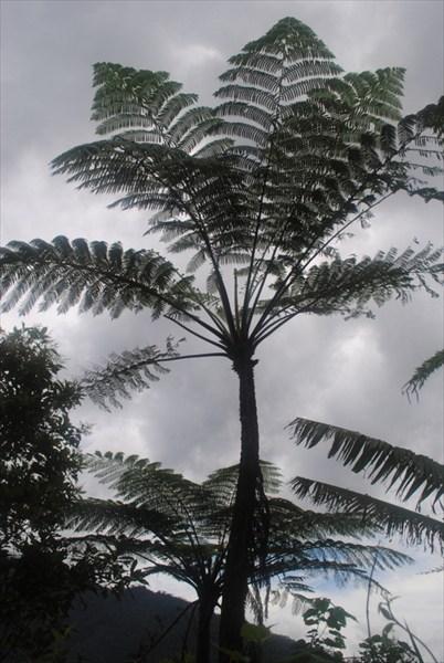 Доисторические деревья
