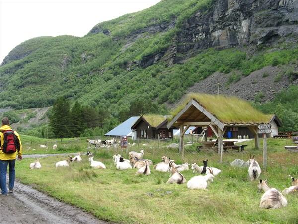 Козья ферма по дороге, где продают сыры