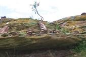 Жертвенное дерево