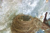IMG_8616 Птенчики затаились.