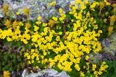 Июньские первоцветы