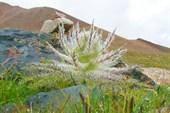диковинные кактусы
