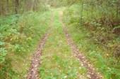 Дороги в лесу для УАЗа