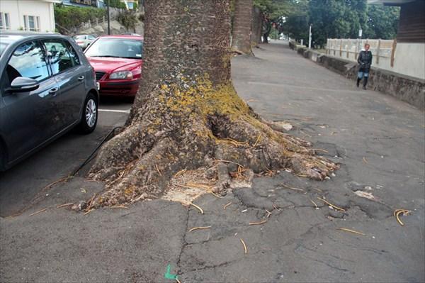 Деревья в Нейпире