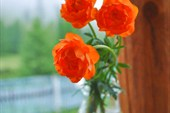 Утренние цветы на крыльце