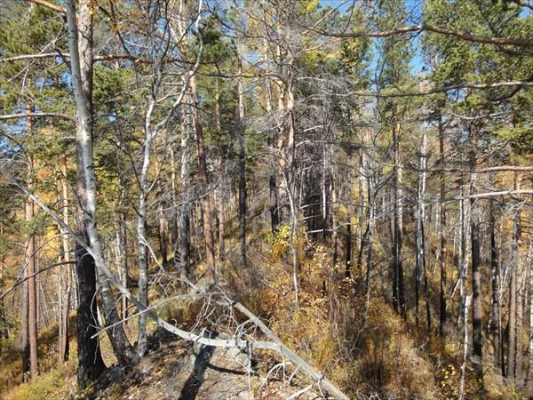 Лес на вершине горы