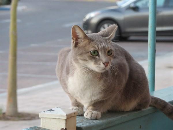 046-Кот