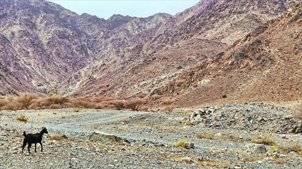 Горы по пути к Фуджайра